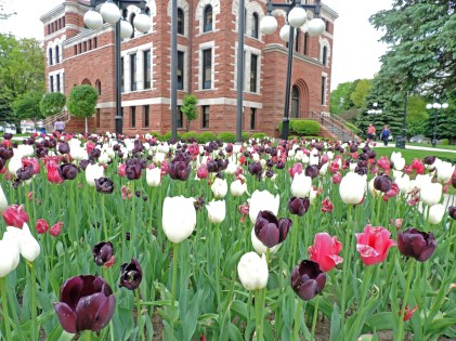 courthousetulips
