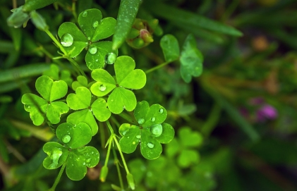 rainyshamrocks_jeonsango2